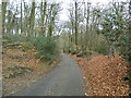 SU7894 : Road through Dell's Wood, Horsleys Green by John Lord