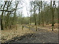 SU7894 : Track in Dell's Wood, Horsleys Green by John Lord