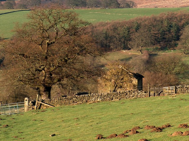Old barn and tree above Beeley