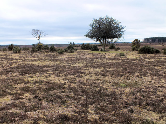 Heathland, Turf Hill