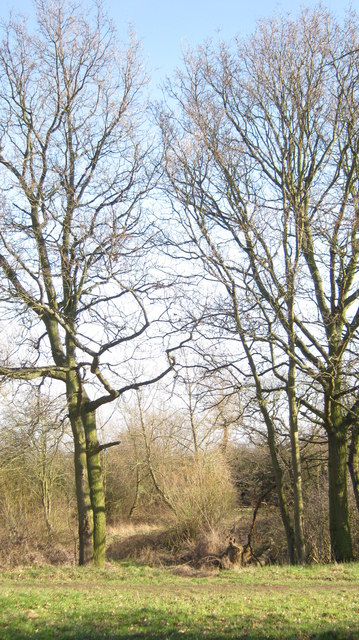Small wooded area