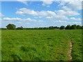 SU9097 : Pasture, Holmer Green, Little Missenden by Andrew Smith