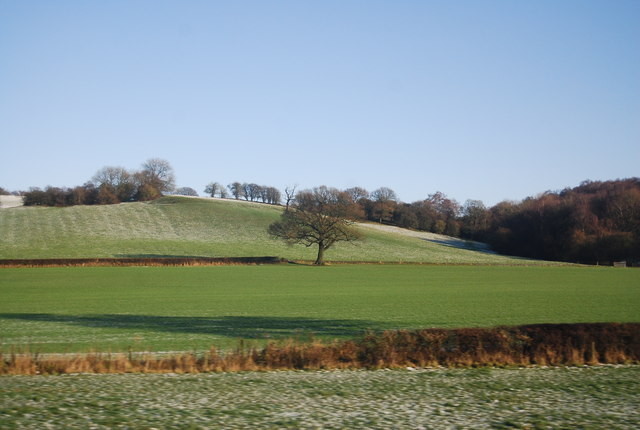 Single tree in a farming landscape
