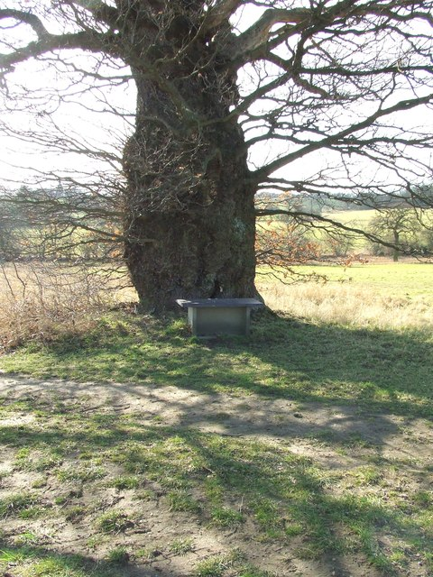 Old Tree And Memorial seat