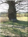 TL8638 : Old Tree And Memorial seat by Keith Evans