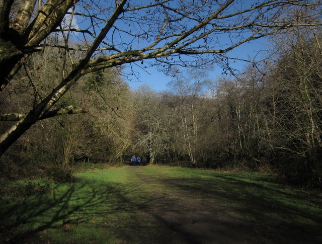 Glade in Rudge Wood