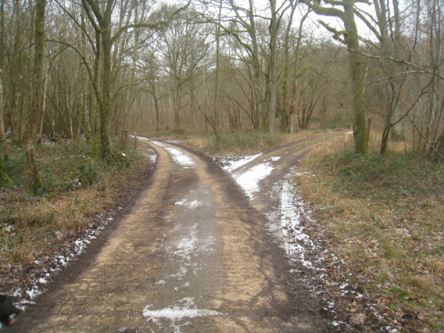 Two paths through Hartway Copse