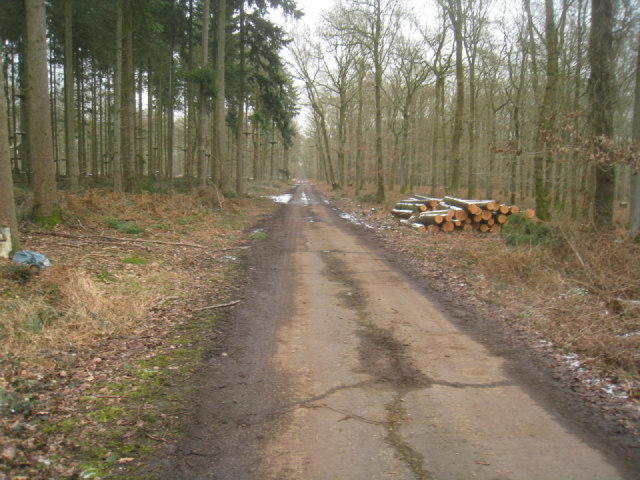 Track through Harewood Forest