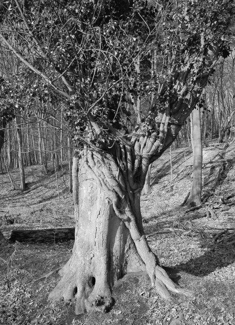 Tree, Minsmere