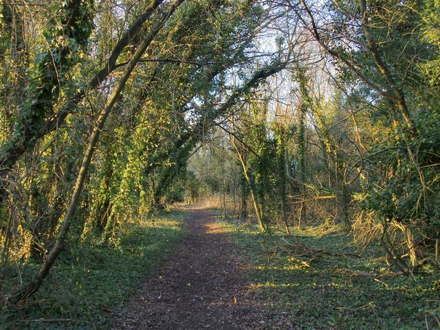 Riverside path, through scrub woodland