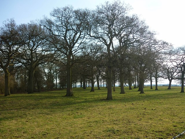 Trees on Cow Down at Perborough Castle