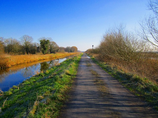 Cycle path through Shapwick Heath