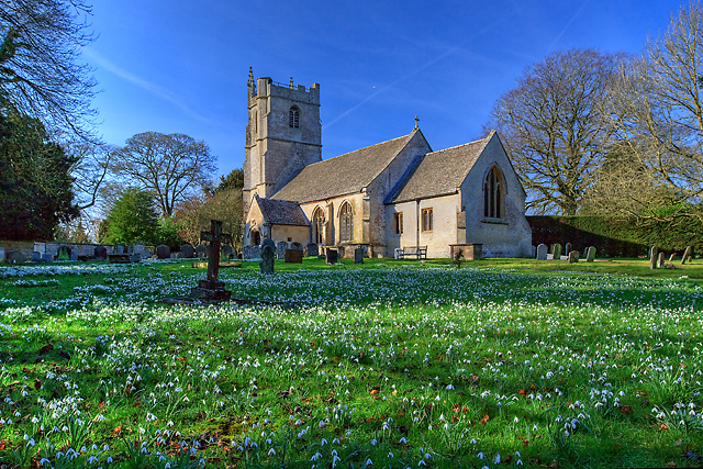 Snowdrops - St Peter's church, Clyffe Pypard
