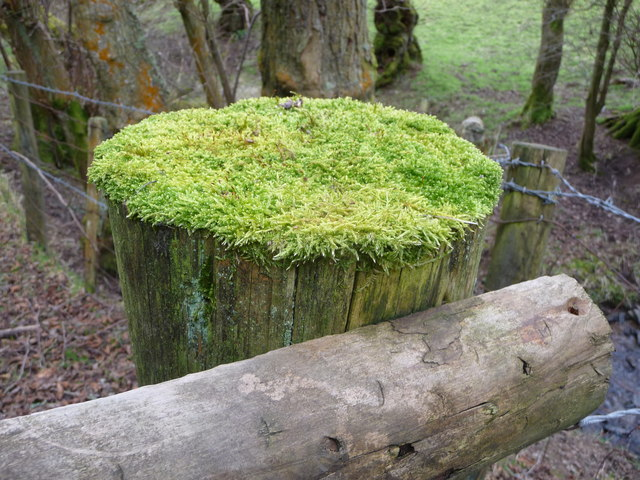 Fencepost topped with moss