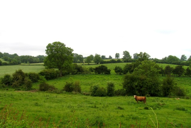 Fields by Little Dalby Road