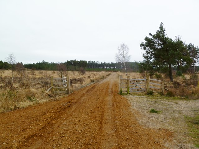 Bloxworth Forest, gates