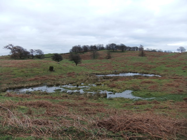 Ponds near Mountjoy Wood