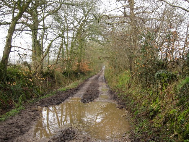Bridleway above Lickham Bottom