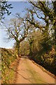 ST0116 : Mid Devon : Country Road by Lewis Clarke