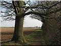 TL4155 : Barton to Grantchester by John Sutton