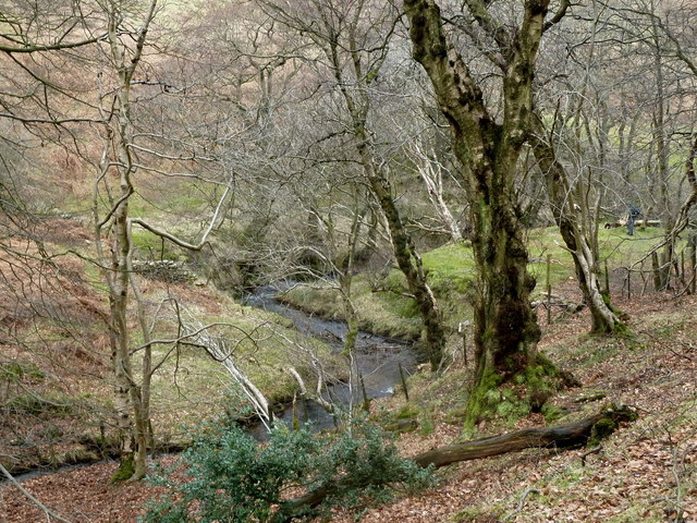 Backside Wood, Jaggers Clough