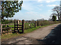 SJ7983 : Cheshire Lane by Stephen Burton