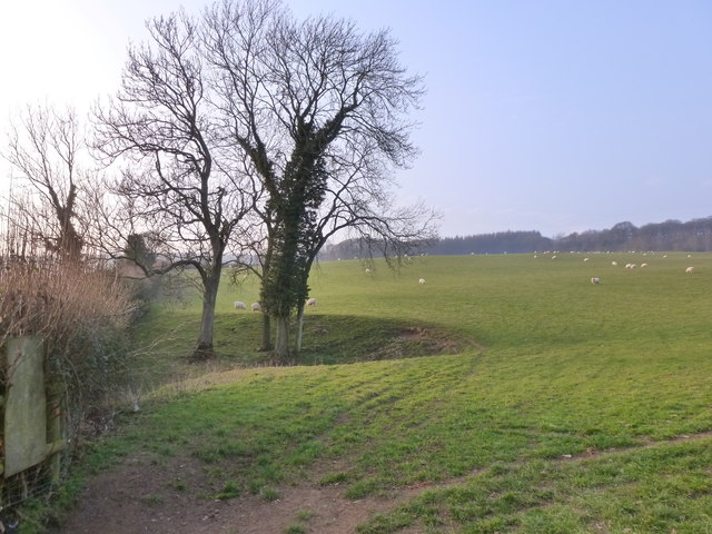 Field of sheep, near Cross Green
