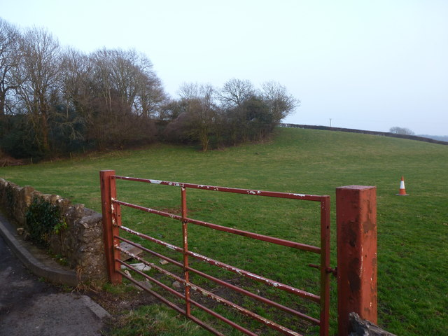 Field, with grazing traffic cone, Llanvaches