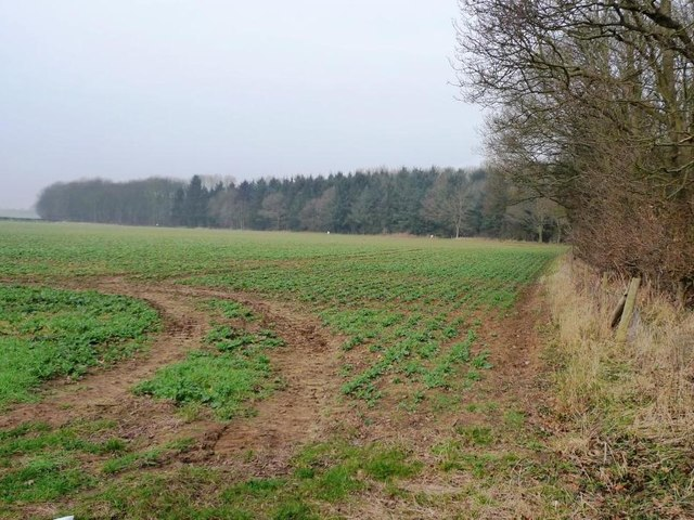 Willowbridge Wood