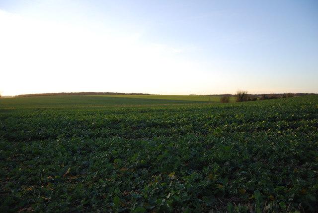 A farming landscape