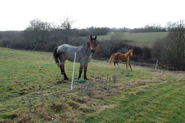 Horses in Field near Sandhurst