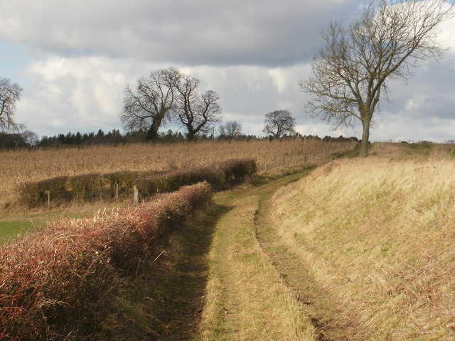 Public bridleway south of Coxlease Farm � view north