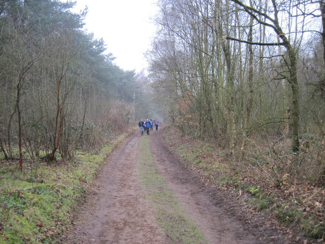 Track  through  Houghton  Woods