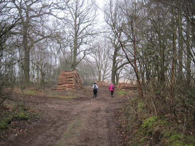Timber  awaiting  Collection  in  Houghton  Woods