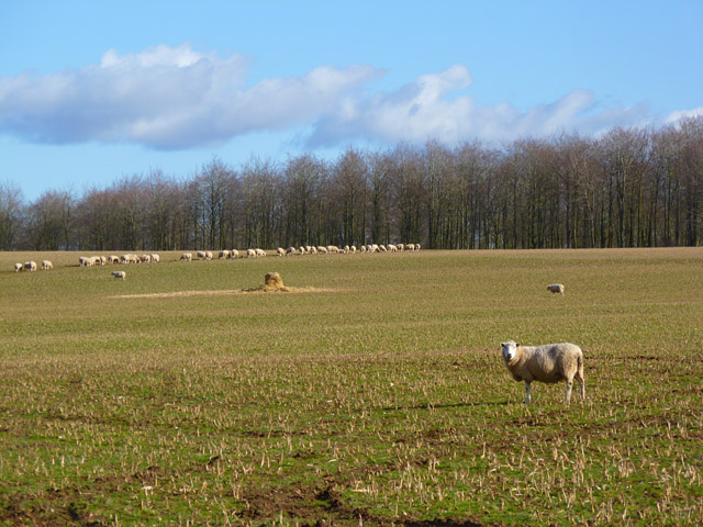 Pasture, Leckford