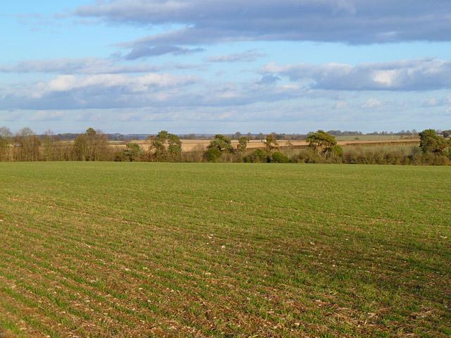 Farmland, Barton Stacey