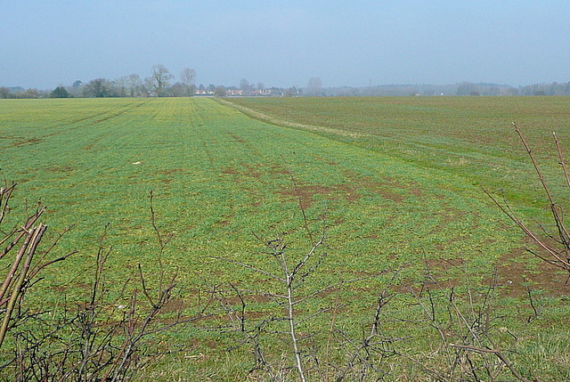 Farmland near Fyfield
