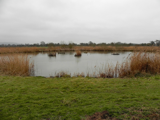 WWT Slimbridge, The South Finger Reedbed
