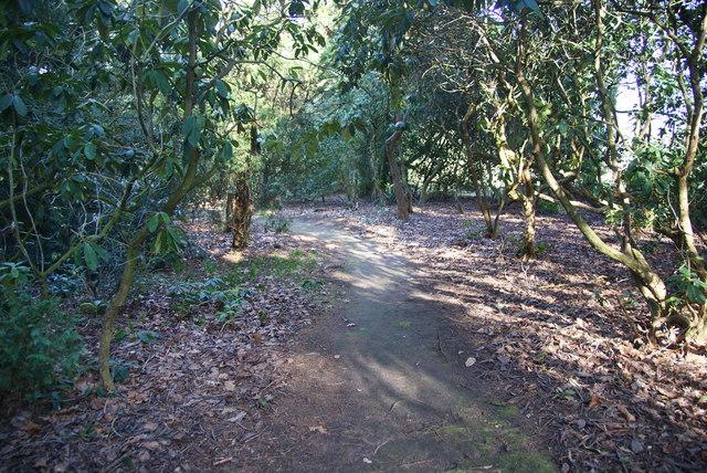 Woodland path in Tatton Park garden