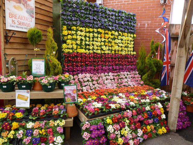 Springtime display at chepstow garden ruth sharville for Garden display ideas