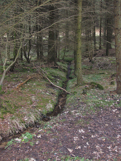Spring draining down to the beck