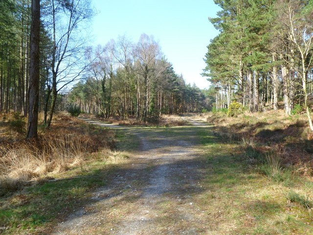 Hethfelton Wood, forestry road junction