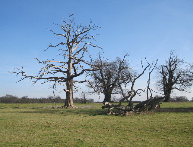 Dead trees in Ickworth Park