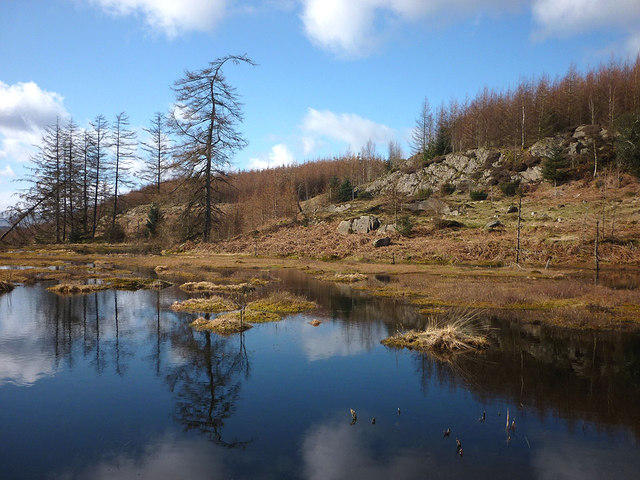 Tarn on Brown Stone Moss, Claife Heights