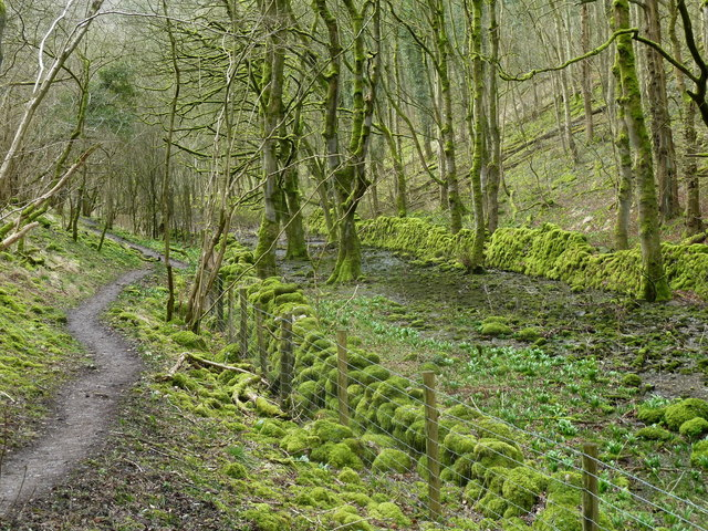 In Cressbrook Dale