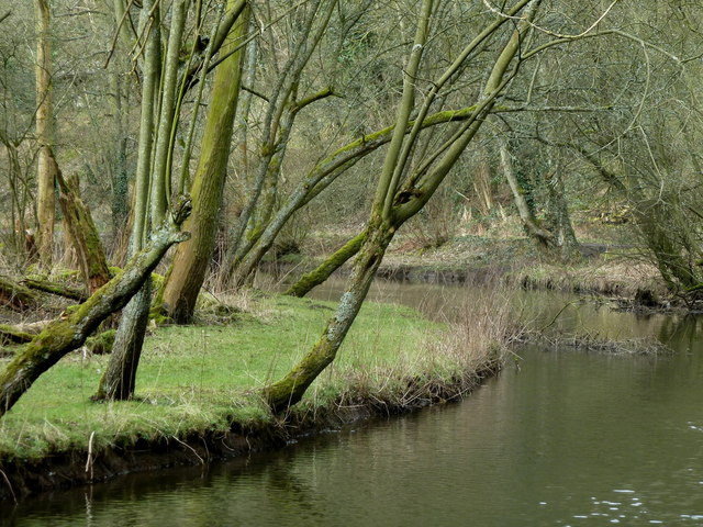 Trees by a bend in the River Wye