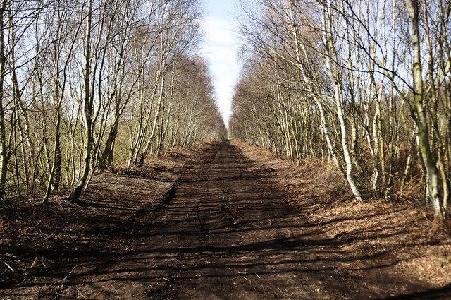 'Boston Park', Hatfield Moors, Humberhead Peatlands NNR