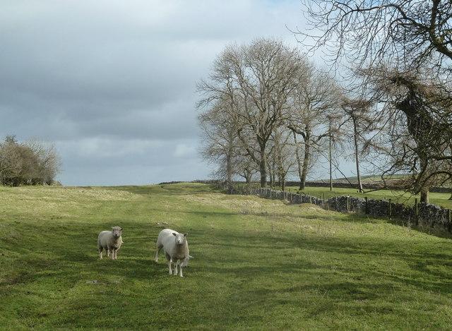 Upland grazing near Bull Tor