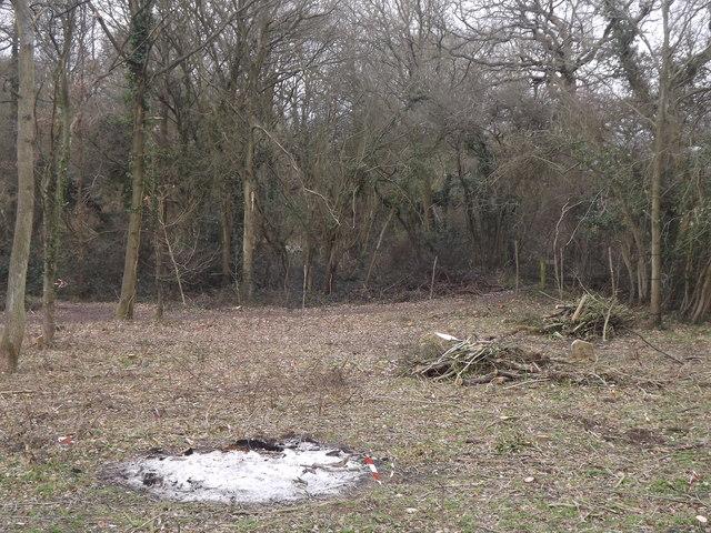 Pond Wood