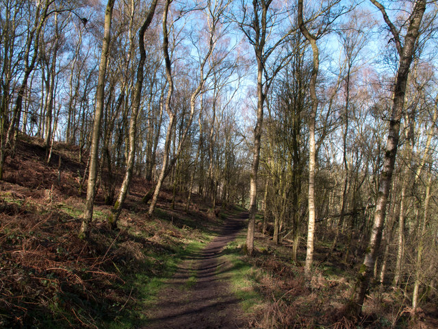Footpath through Harthill Moor Wood